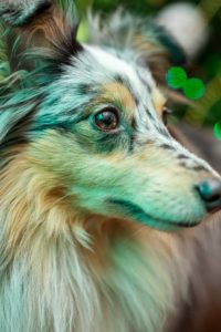 Fotografia zwierząt okolicznościowa